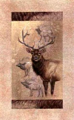 wildlife drawings and paintings